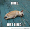 Too Tired for Good Behavior?